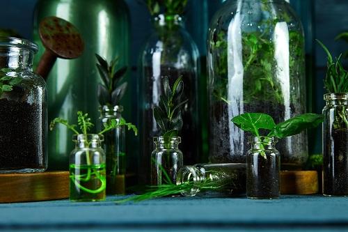 décorer la maison avec des vases en Q de bouteilles